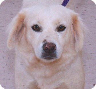 Spaniel (Unknown Type) Mix Dog for adoption in McDonough, Georgia - Lollie