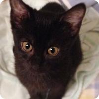 Adopt A Pet :: Fern - Bentonville, AR