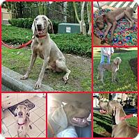Adopt A Pet :: Newman - Inverness, FL