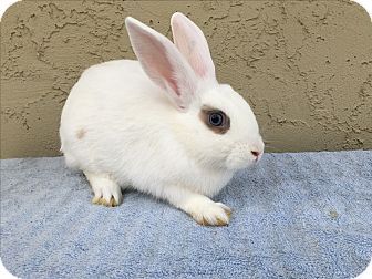 Other/Unknown Mix for adoption in Bonita, California - Tanya