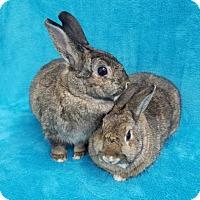 Adopt A Pet :: Franny - Los Angeles, CA