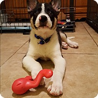 Adopt A Pet :: TEDDY - Middlesex, NJ