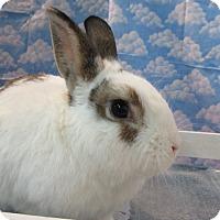 Adopt A Pet :: Cisco - Newport, DE