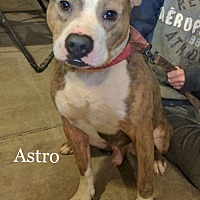 Adopt A Pet :: Astro - Mt juliet, TN