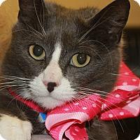 Adopt A Pet :: HARPER - Clayton, NJ