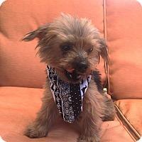 Adopt A Pet :: Hope - Louisville, KY