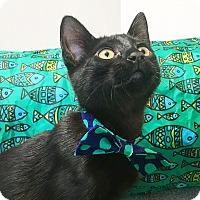 Adopt A Pet :: Pickle - Duluth, GA
