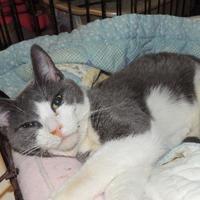 Adopt A Pet :: Merry - Westville, IN