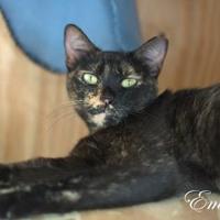 Adopt A Pet :: Emmie - Middleburg, FL