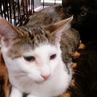 Adopt A Pet :: Moon Zappa - Columbus, OH
