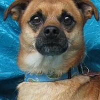 Adopt A Pet :: Ben Brown - Cuba, NY