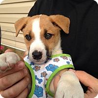 Adopt A Pet :: Cheerio - Medicine Hat, AB
