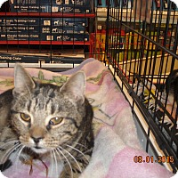 Adopt A Pet :: Kara (and Parker) - Riverside, RI