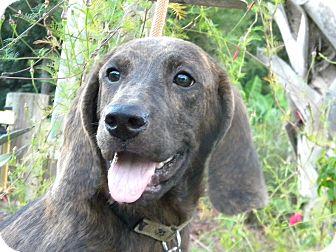 Plott Hound Mix Puppy for adoption in Ocean Springs, Mississippi - Johnny