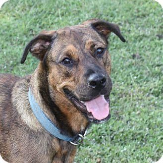 Boxer Mix Dog for adoption in Marion, Arkansas - Zena