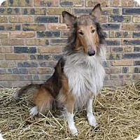 Adopt A Pet :: Nash - Powell, OH