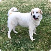 Adopt A Pet :: Murray *Adopted - Tulsa, OK