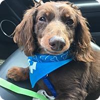 Adopt A Pet :: Luckie - Decatur, GA