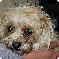 Adopt A Pet :: May - Thousand Oaks, CA