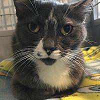 Adopt A Pet :: Garreta - Lafayette, NJ