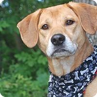 Adopt A Pet :: Abel - New Castle, PA