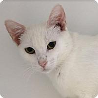Adopt A Pet :: Jessa - Red Bluff, CA