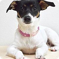 Adopt A Pet :: Minnie - Dublin, CA