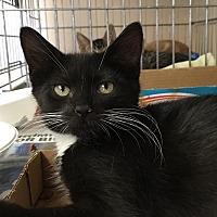Adopt A Pet :: Abilene - East Brunswick, NJ