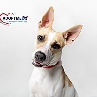 Adopt A Pet :: Bette - Alexandria, VA
