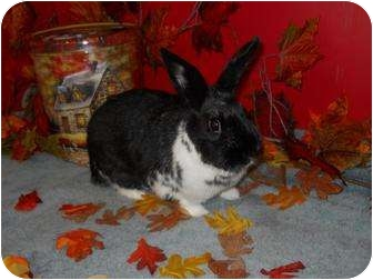 Other/Unknown Mix for adoption in Roseville, California - Ariel