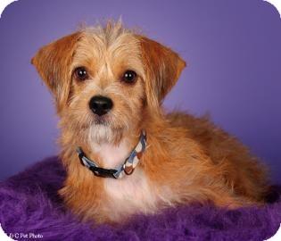 Dachshund Mix Dog for adoption in Columbus, Georgia - ROCKY 5748