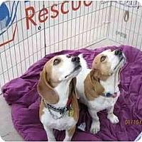 Adopt A Pet :: Elsie May - Phoenix, AZ