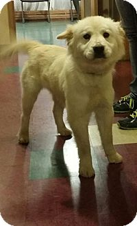 Chow Chow/Great Pyrenees Mix Dog for adoption in Lebanon, Tennessee - Miss Bethpage