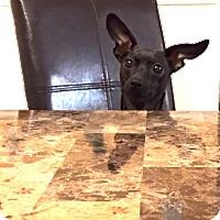 Adopt A Pet :: *Dora - PENDING - Westport, CT