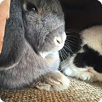 Adopt A Pet :: Username - Los Angeles, CA