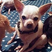 Adopt A Pet :: Bobber - Brooksville, FL