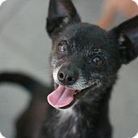 Adopt A Pet :: Butch - Canoga Park, CA