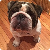 Adopt A Pet :: Hamish - Chicago, IL