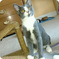 Adopt A Pet :: Autumn - Monroe, NC