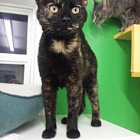 Adopt A Pet :: PHOENIX - McKenzie, TN