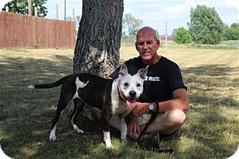 Australian Cattle Dog Mix Dog for adoption in Elyria, Ohio - TJ