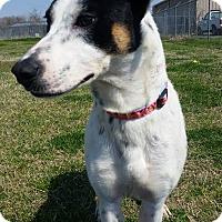 Hound (Unknown Type) Mix Dog for adoption in Cleveland, Mississippi - GRETEL