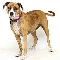 Adopt A Pet :: SIERRA - Sanford, FL