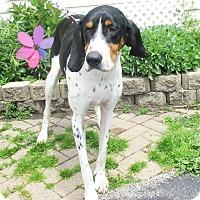 Adopt A Pet :: OU - West Chicago, IL