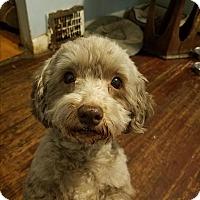 Adopt A Pet :: Lucy - Detroit, MI