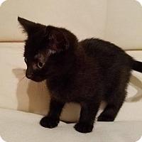 Adopt A Pet :: Onyx - Furlong, PA