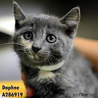 Adopt A Pet :: EMMA - Conroe, TX