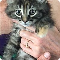Adopt A Pet :: Molly - Middleton, WI