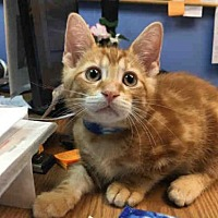 Adopt A Pet :: MICHAEL - Canfield, OH