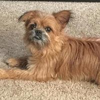 Adopt A Pet :: Winston - Tonawanda, NY